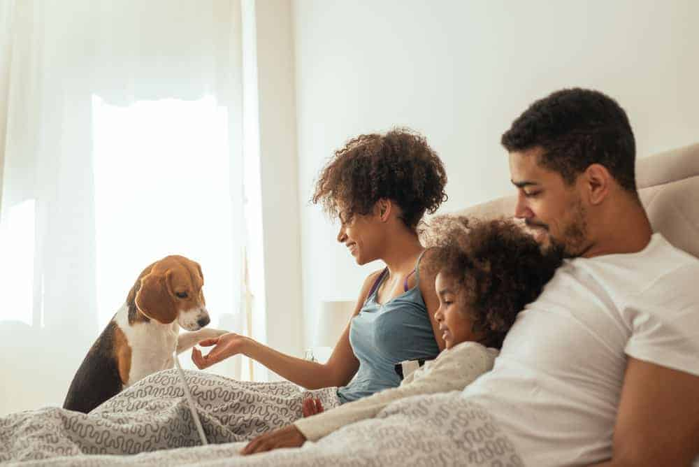 Family on a king bed playing with the dog